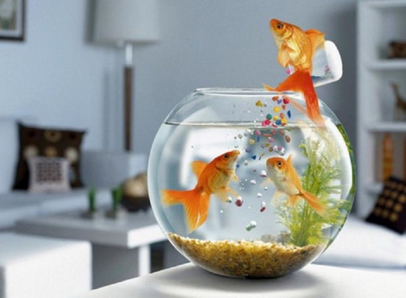 Có bể cá trong phòng sẽ khiến không gian phòng mát hơn
