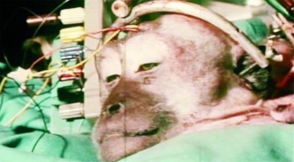 Thí nghiệm ghép đầu