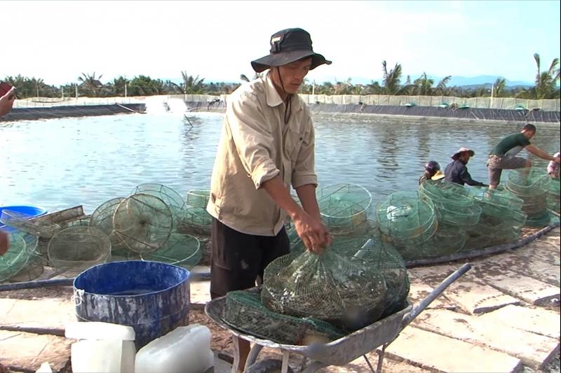 Công việc thu hoạch tôm của người dân trên địa bàn