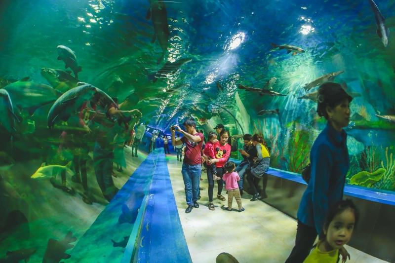 Đường hầm thủy cung tại Thiên Đường Bảo Sơn