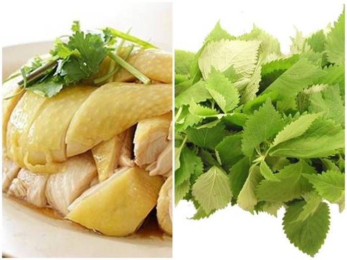 Thịt gà và kinh giới không ăn chung với nhau