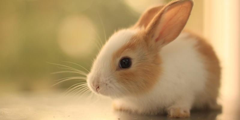 Thỏ con xinh xắn, đáng yêu