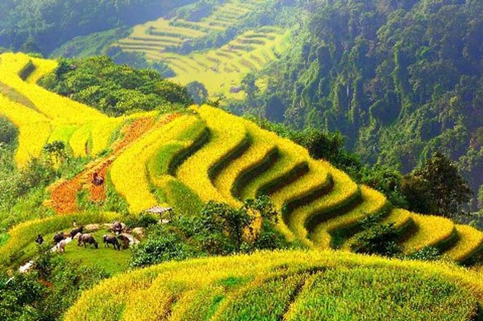 The ideal time to travel to Moc Chau