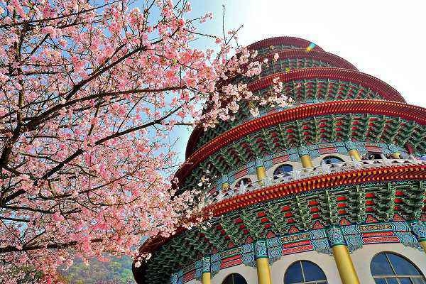 Bạn đến Đài Loan vì muốn ngắm hoa thì trung tuần tháng 2 là thời điểm muôn hoa khoe sắc