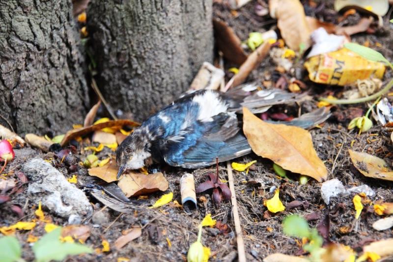 Nghề thu dọn xác động vật trên đường - Nguồn: Sưu tầm