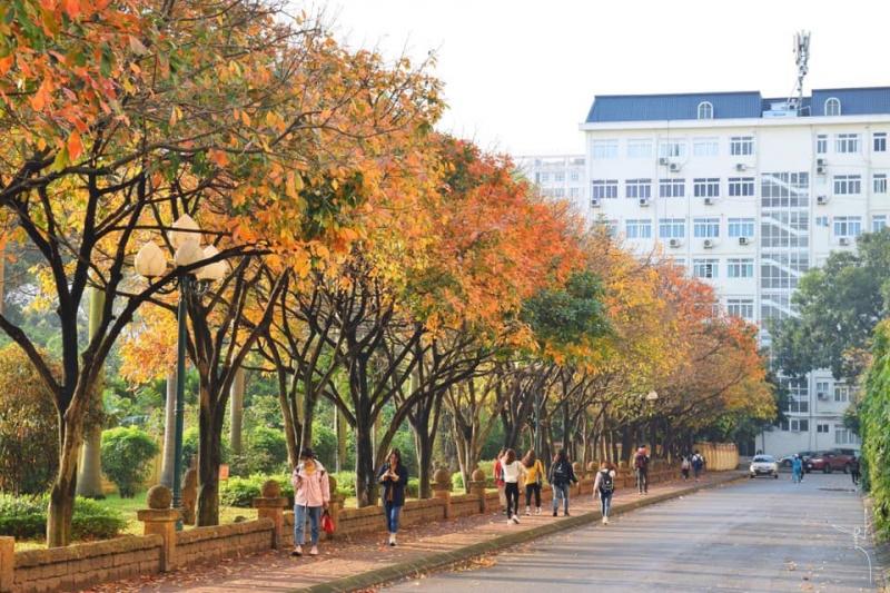 Con đường đẹp ngất ngây dẫn vào thư viện trường Đại học sư phạm Hà Nội