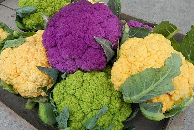Thực phẩm biến đổi gen (GMO) có nguy cơ gây ung thư cao