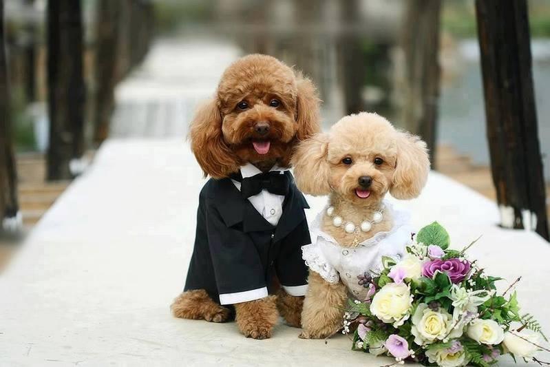 Những chú cún đáng yêu tại ThúKiểng.com