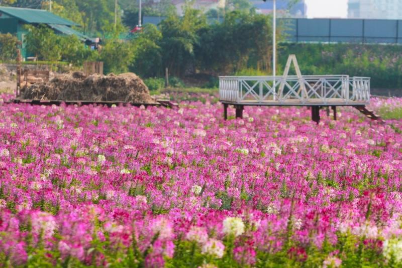 Đến Thung lũng hoa mùa nào cũng ngập tràn sắc hoa tươi đẹp