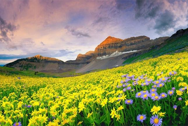 Thung lũng hoa ở Uttarakhand còn được UNESCO công nhận là di sản văn hóa của thế giới