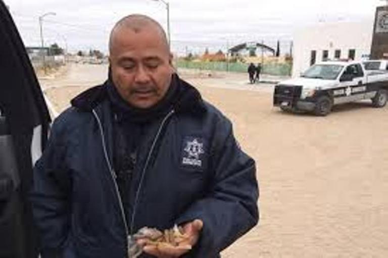 Một cảnh sát đang thu nhặt những viên đạn khi làm việc tại Juarez