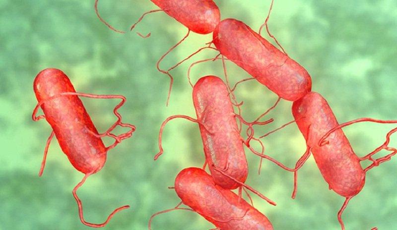 Thương hàn là một bệnh đường tiêu hóa do nhiễm vi khuẩn Salmonella typhi hoặc Salmonella paratyphi