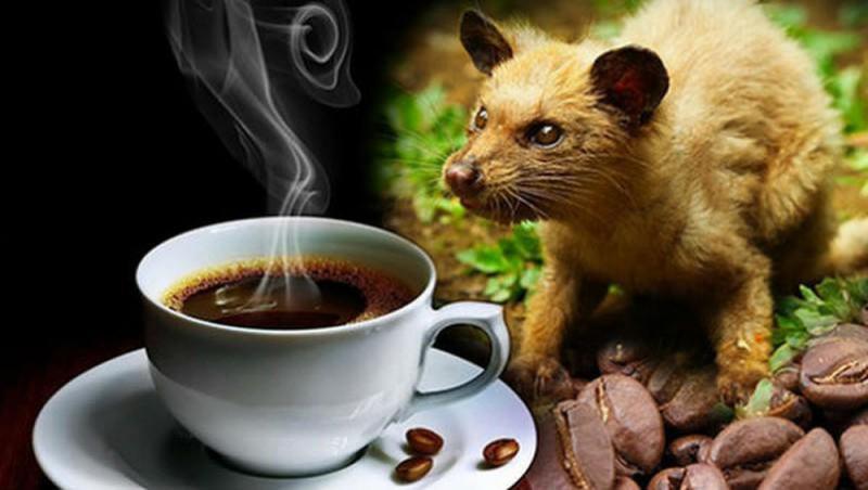 Top 7 sản phẩm cà phê chồn được ưa chuộng nhất hiện nay