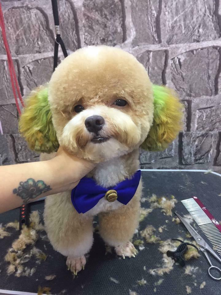 TiBi Dog Shop