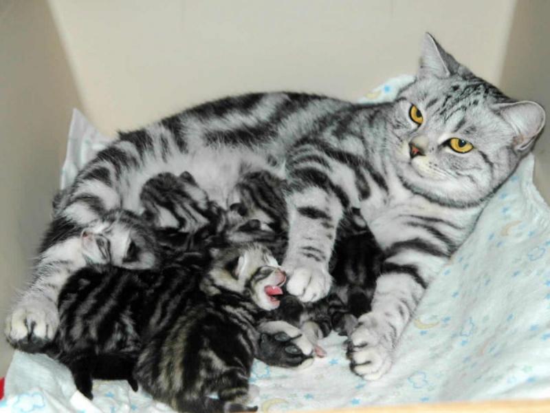 Việc chăm sóc khi số lượng thú nuôi tăng gây nhiều khó khăn về kinh tế