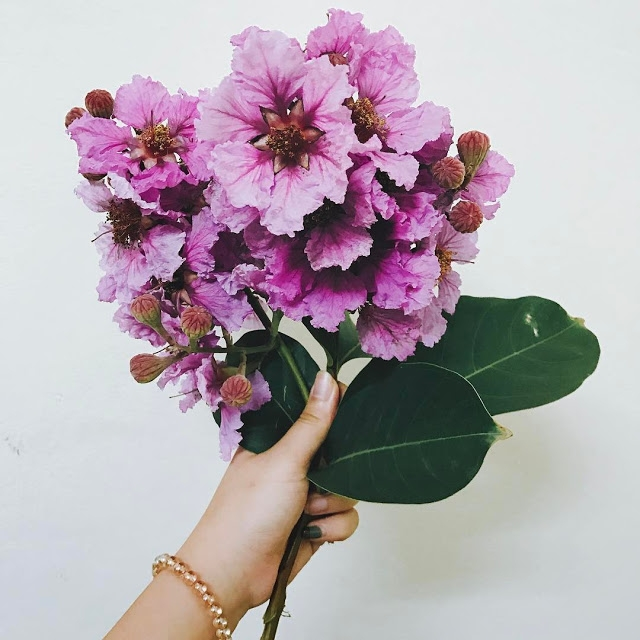 Những đóa hoa chứa đựng thông điệp