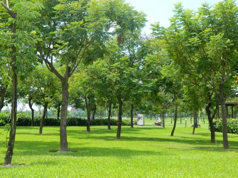 Dạo chơi công viên