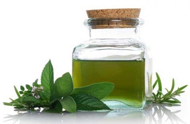 Tinh dầu hạt Trà xanh