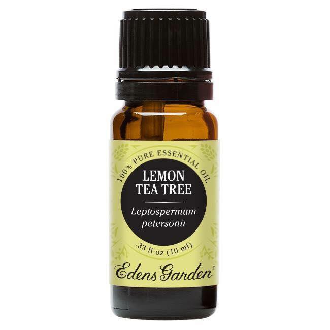 Tinh dầu tràm trà Lemon Tea Tree Essential Oil của Edens garden