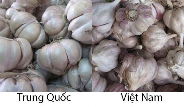 Tỏi Việt Nam củ và tép nhỏ hơn tỏi Trung Quốc rất nhiều
