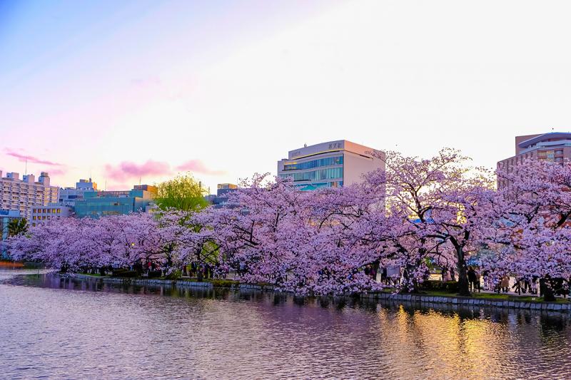 Tokyo nổi tiếng với hoa anh đào