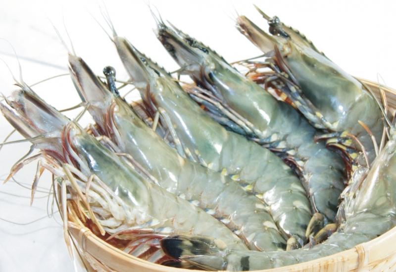 Tôm là một loại hải sản rất quen thuộc (Nguồn: Sưu tầm)