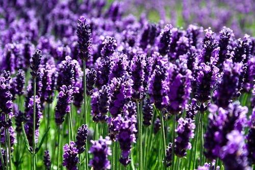 Top 21 loài hoa đẹp và ý nghĩa