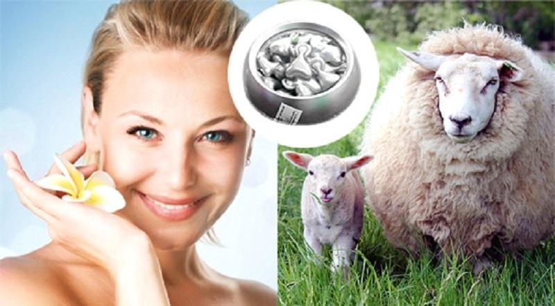 Tiêm tế bào phôi thai cừu nhằm duy trì sự trẻ trung