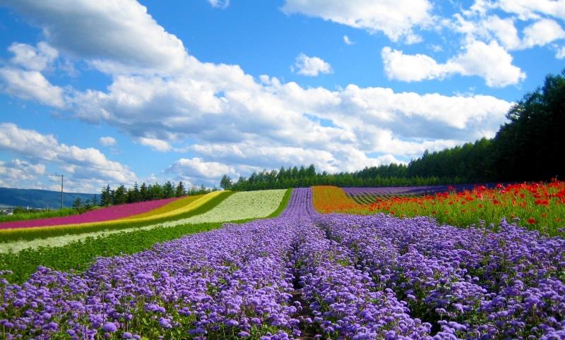 Phong cảnh thiên nhiên hùng vĩ và cánh đồng hoa sặc sỡ