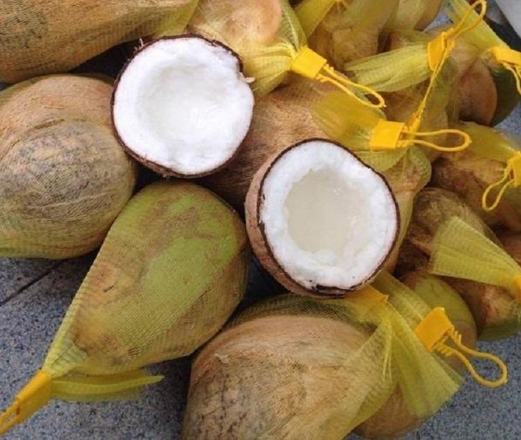 Dừa sáp, đặc sản Trà Vinh