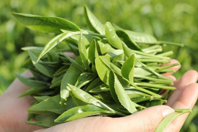 Trà xanh có tác dụng rất hiệu quả trong việc làm dịu những vết bỏng rát do cháy nắng và làm mềm da.