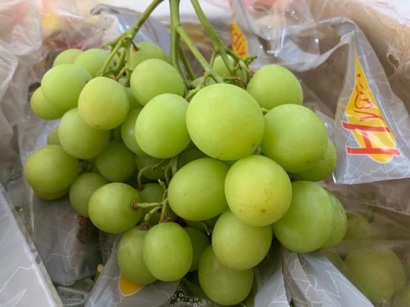 Trái cây nhập khẩu - Daily Fruits
