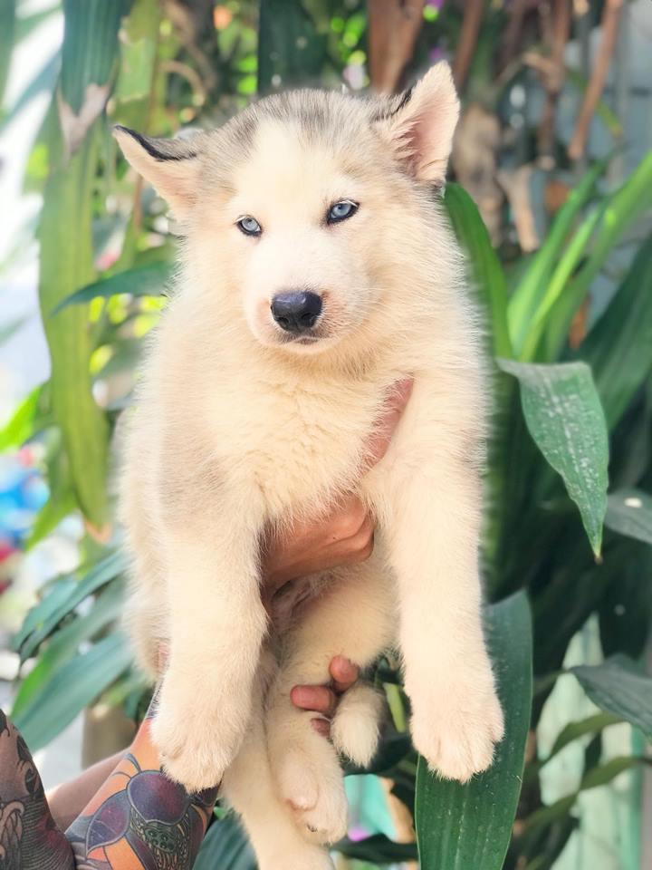 Trại chó Lê Trung