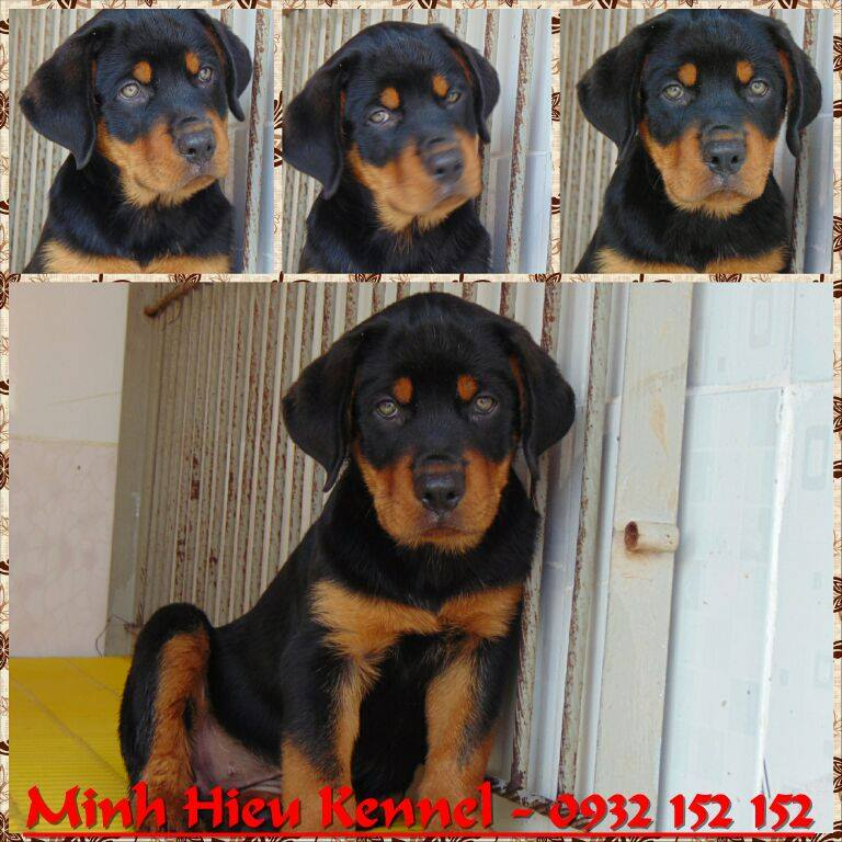 Trại chó Minh Hiếu