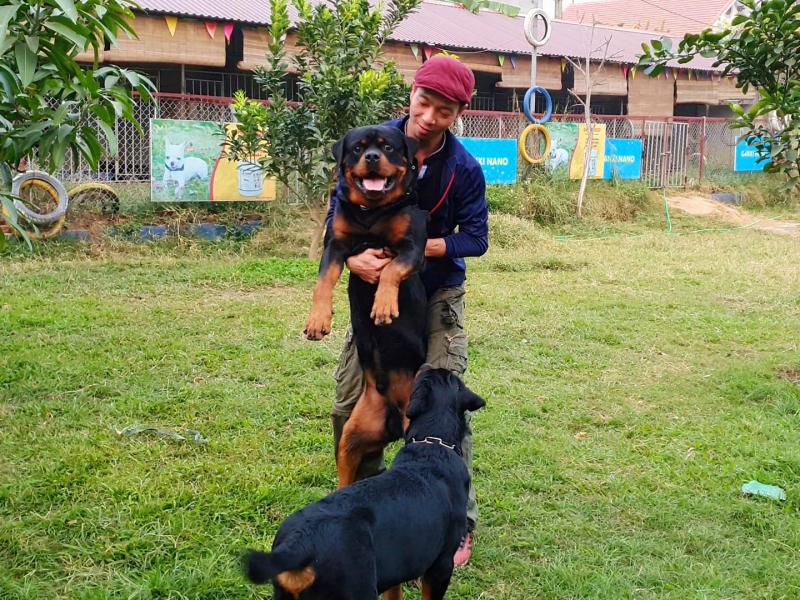 Trại chó Rottweiler Gervi