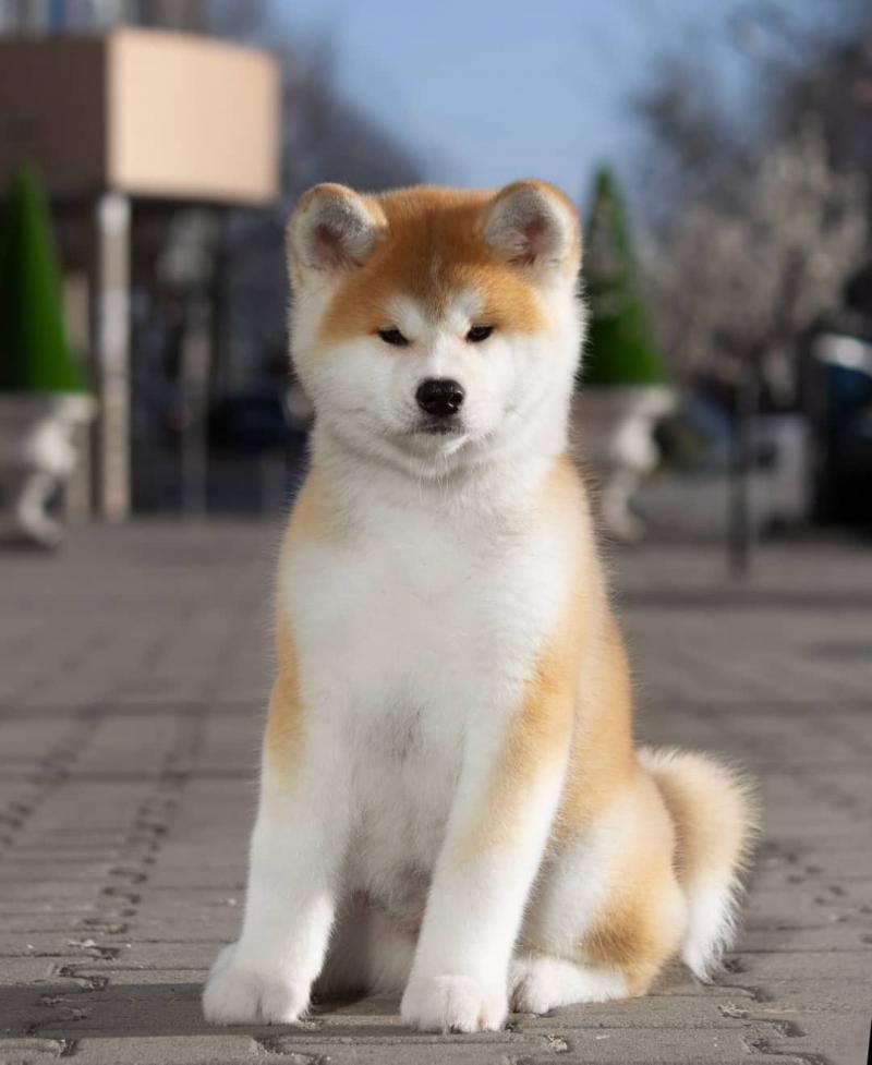 Trại chó Thành Đạt