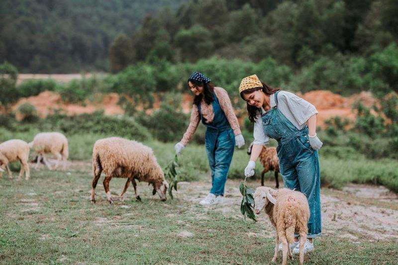 Bạn trẻ tạo dáng bên đàn cừu