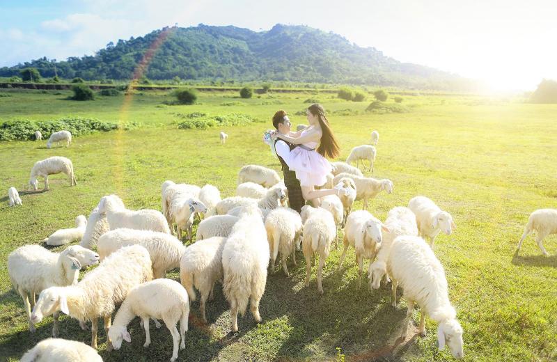 Trại cừu