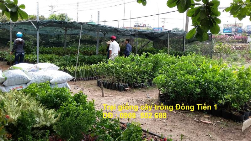 Trại giống cây trồng Đồng Tiến 1