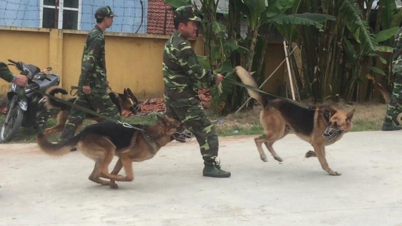 Trại huấn luyện chó K9 là địa chỉ huấn luyện chó nghiệp vụ chuyên nghiệp