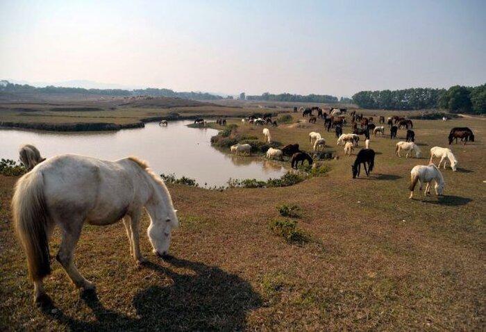 Trại ngựa Bá Vân