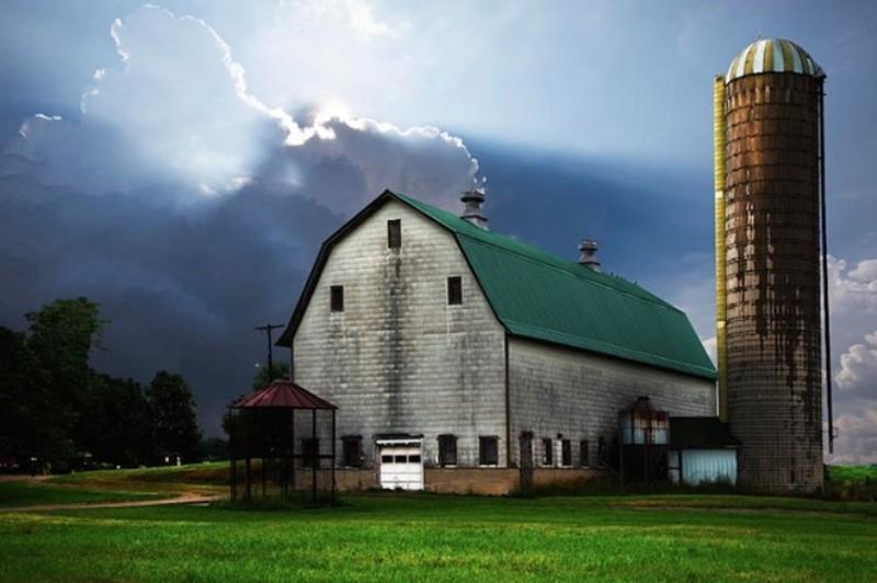 Trang trại bò sữa Michigan Dall