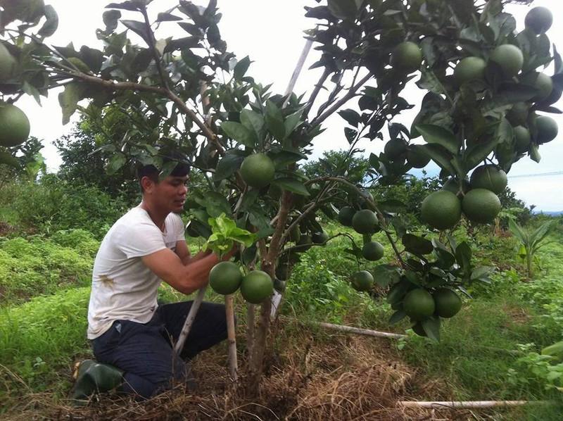 Trang Trại Cam sinh thái Lam Định