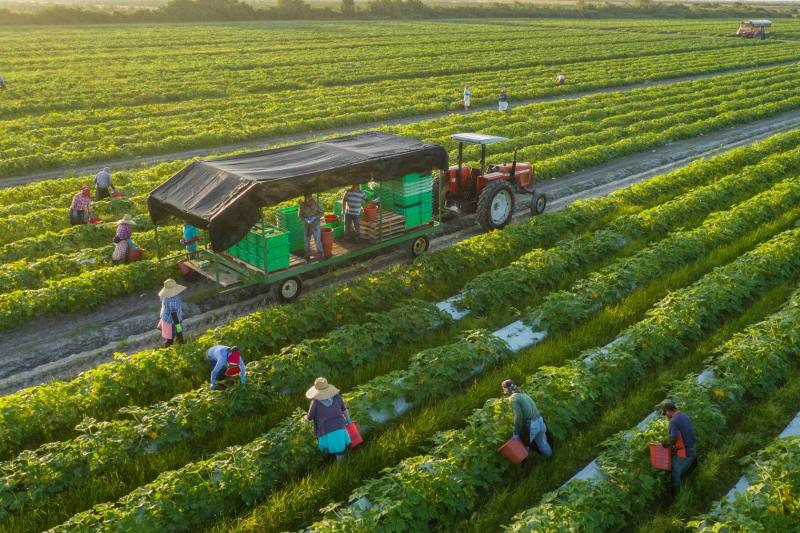 Trang trại hữu cơ  Nông sản ngon