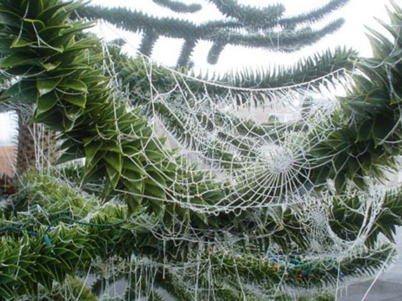 Trang trí cây thông noel bằng mạng nhện của người dân Ukraine