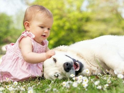 Tránh xa các con vật nuôi