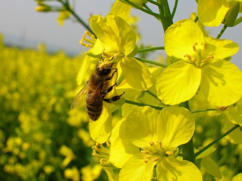 Tránh xa phấn hoa để chống dị ứng