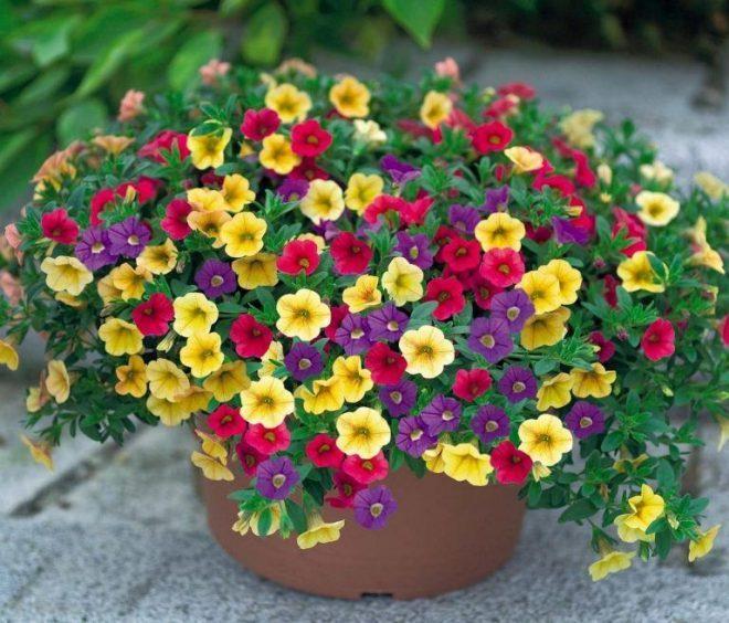 Tránh xa phấn hoa gây dị ứng