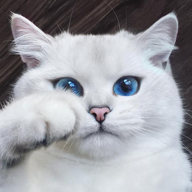 Những chú mèo khởi nguồn trào lưu