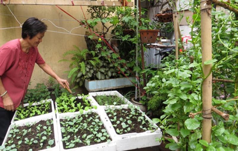 Trồng rau trong những thùng xốp vừa có rau ăn lại làm không gian thêm xanh mát